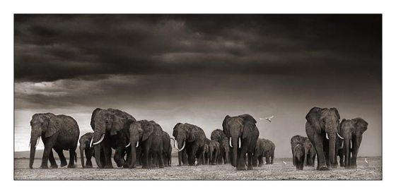05_elephants-egrets-after-st.jpg