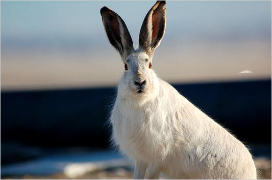 rabbit_533.jpg