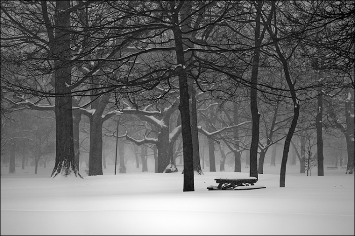 queens-park_snow_bench_trees_01.jpg