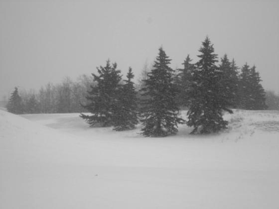 Spring snow scene l