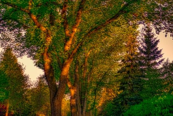 street tree 3