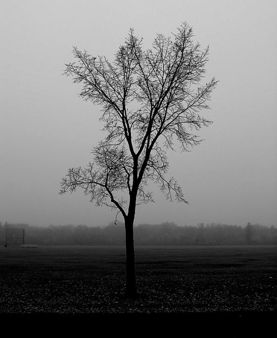 misty october morning