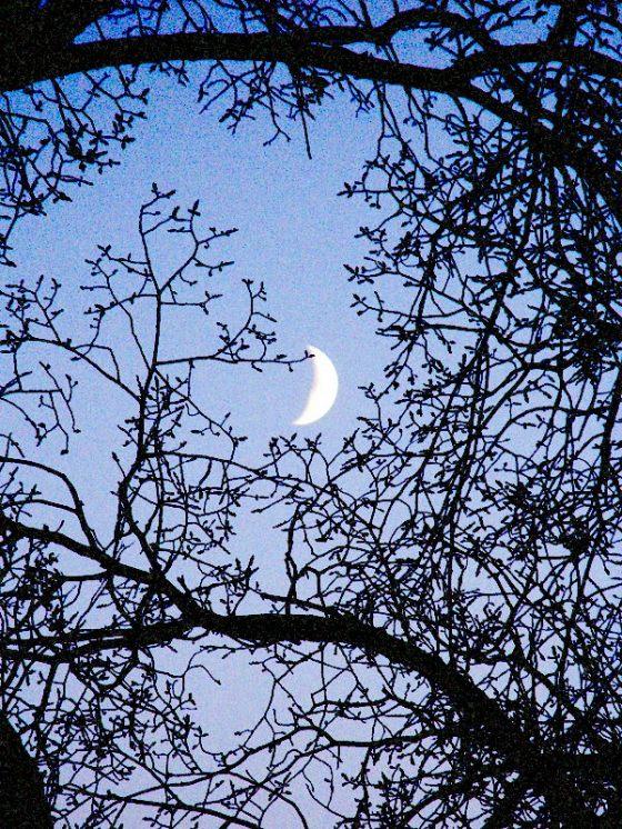 night moon ala maxfield